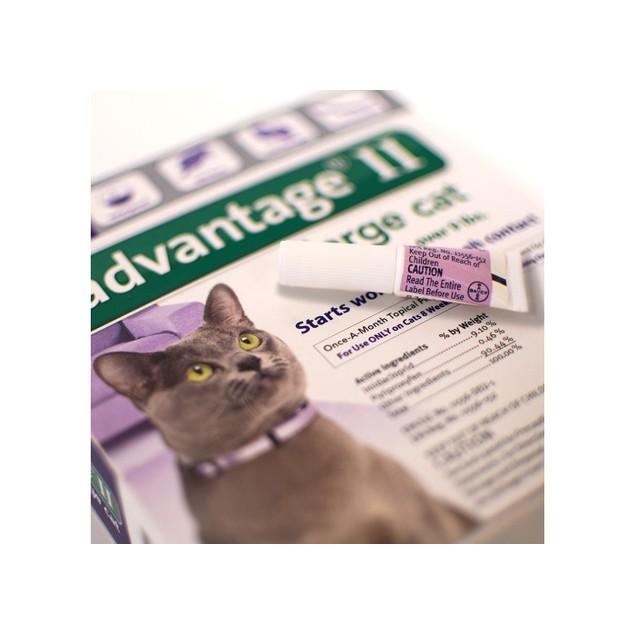 Bayer Animal Health Advantage II Flea Prevention & Treatment for Large Cat,