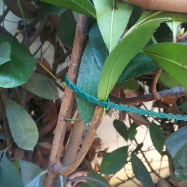 50Pcs Plastic Landscape Fishbone Spur Plant Belt Band Ties Garden Tools