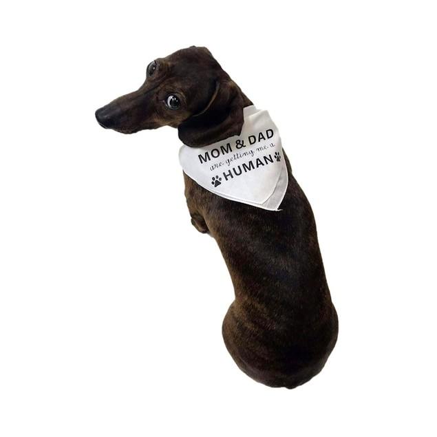 Midlee Mom & Dad are Getting me a Human Dog Bandana