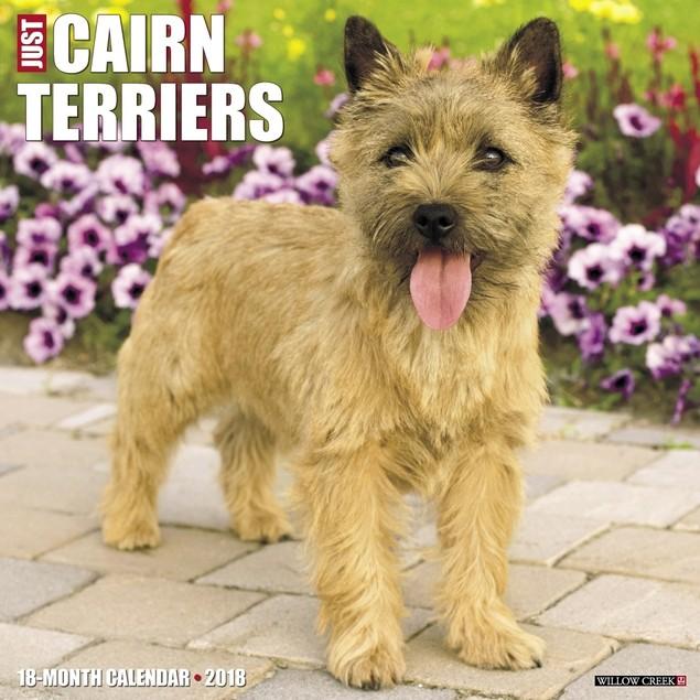 Cairn Terrier Wall Calendar, Cairn Terrier by Calendars