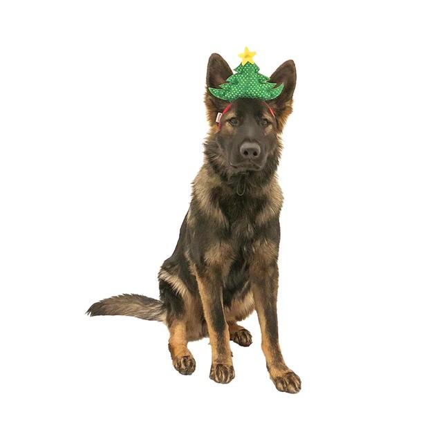 Midlee Christmas Tree Dog Headband