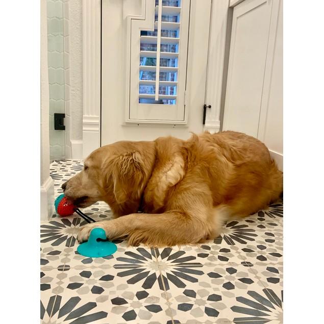 Treat Dispensing Dog Pull Toy