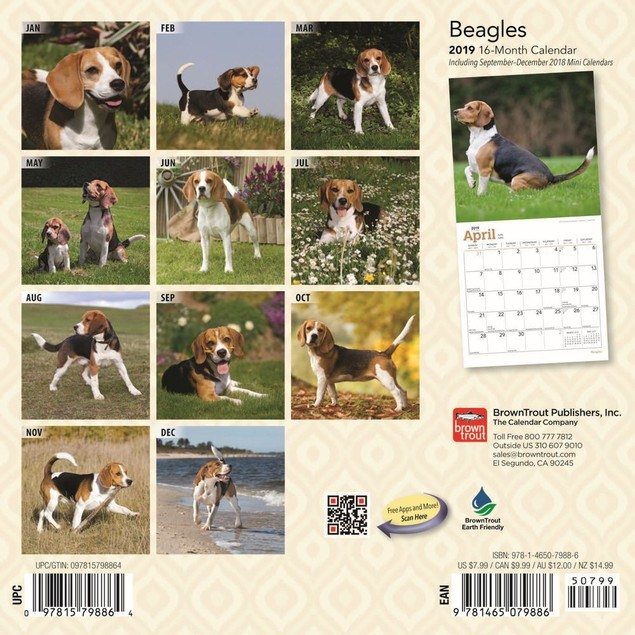 Beagle Mini Wall Calendar, Beagle by Calendars