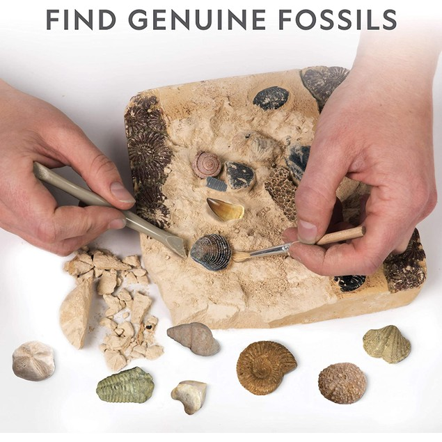 Mega Fossil Dig Kit - Dig Up 15 Real Fossils, Dinosaur Bones, Shark Teeth & More