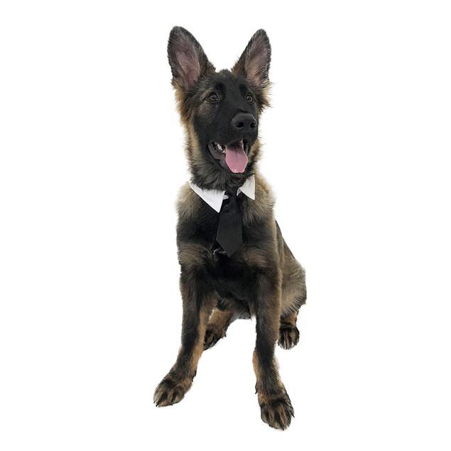 Midlee Formal Black Dog Tie 23-26 Neck (XX-Large)