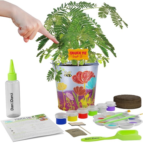 Paint & Plant Touch Me Not Flower Growing Kit - Grow Your Own Tickle-Sensetive Mimosa Plant