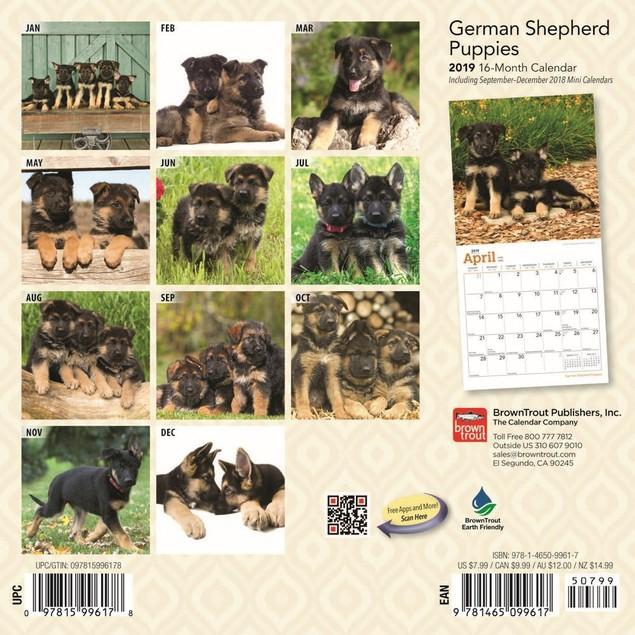German Shepherd Puppies Mini Calendar, German Shepherd by Calendars