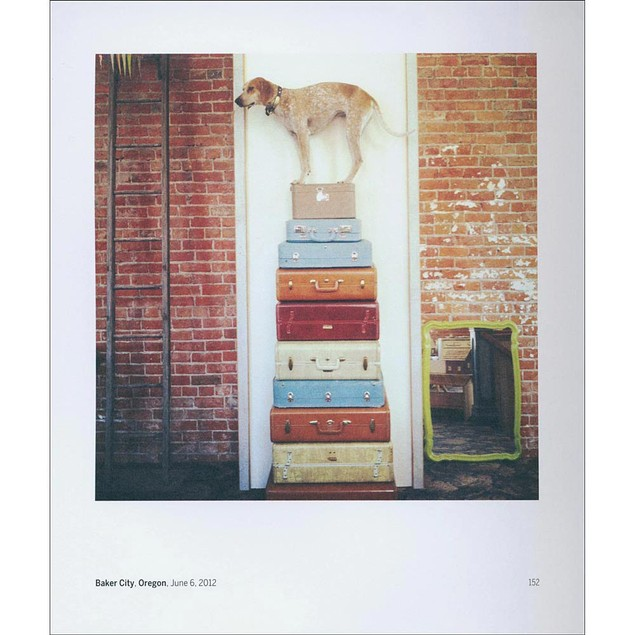 Maddie on Things, Funny Dogs by Chronicle Books