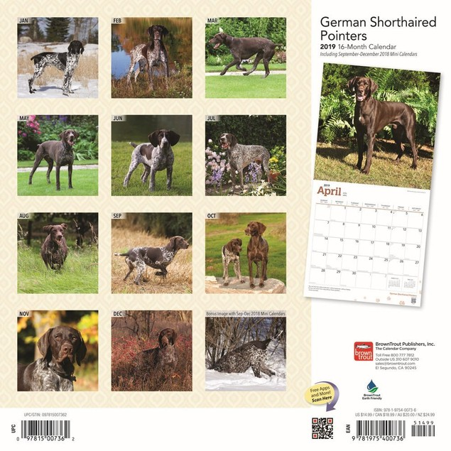 German Shorthaired Pointers Wall Calendar, German Shorthaired Pointer by Ca