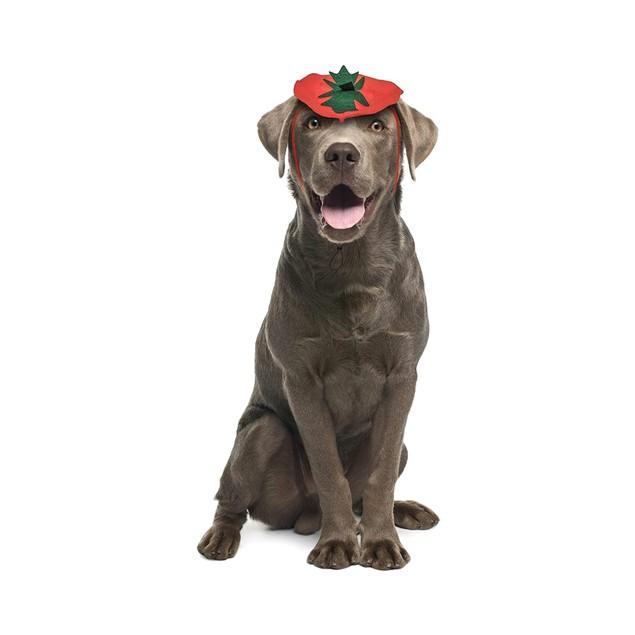 Midlee Dog Pumpkin Headband Halloween Costume