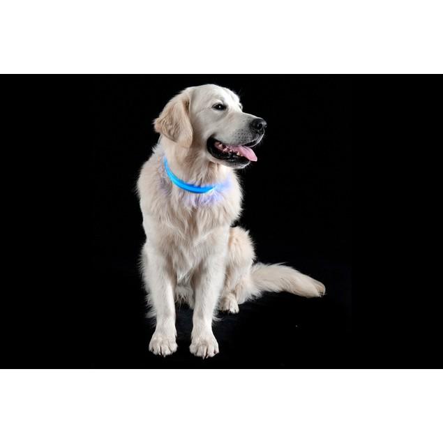 FurHaven Safety LED Light-Up Dog Collar