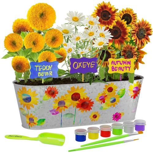 Paint & Plant Sunflower Growing Kit - Grow Autumn Beauty, Teddy Bear, Oxeye Sun Flowers