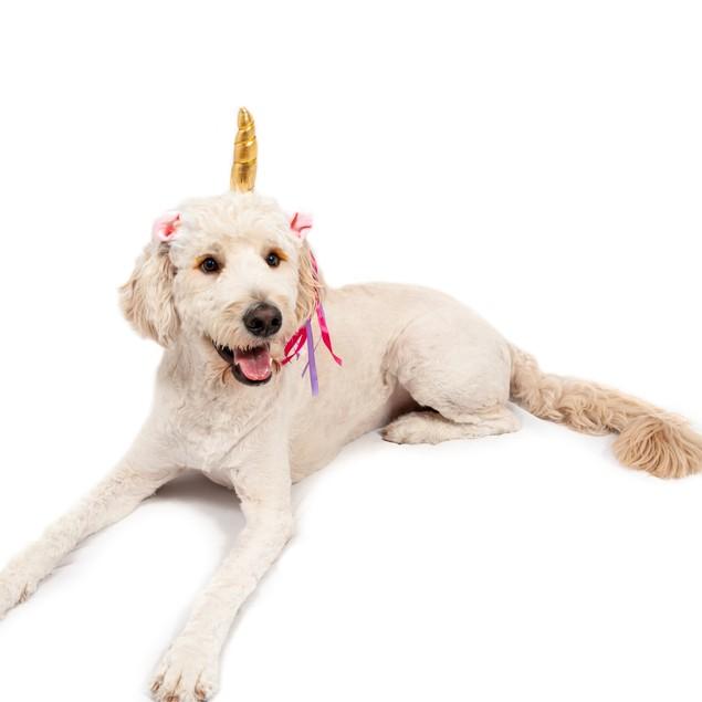 Midlee Dog Unicorn Horn Headband Halloween Costume