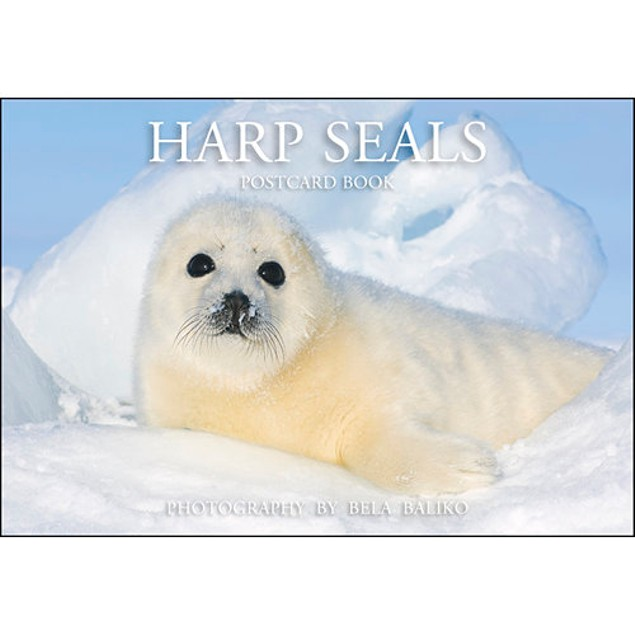 Harp Seals Postcard Book, Wildlife by Bela Baliko Photography