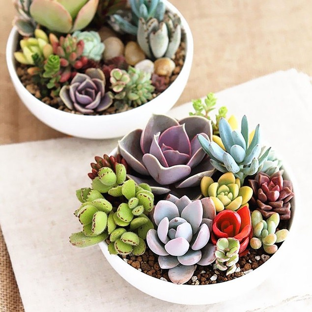 100Pcs Mixed Rare Plant Exotic Lithops Succulent Seeds Potted Decoration