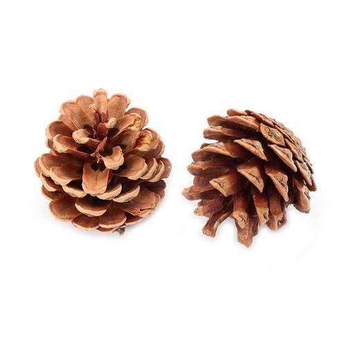 "Homvare Natural Austrica Pine Cones 2 1/4"" Unscented, 10 Pieces"