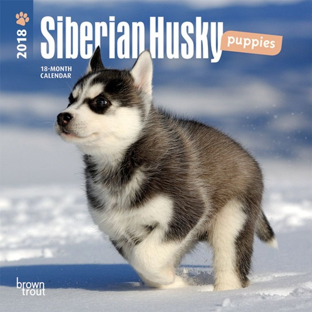 Siberian Husky Puppies Mini Wall Calendar,  by BROWNT