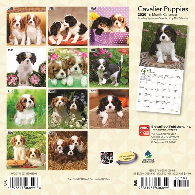 Cavalier King Charles Puppies Mini Wall Calendar,  by BROWNT