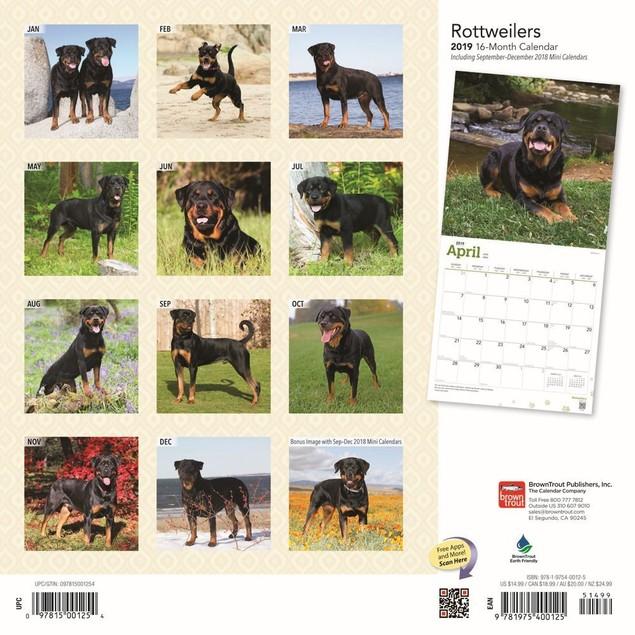 Rottweilers Wall Calendar, Rottweiler by Calendars