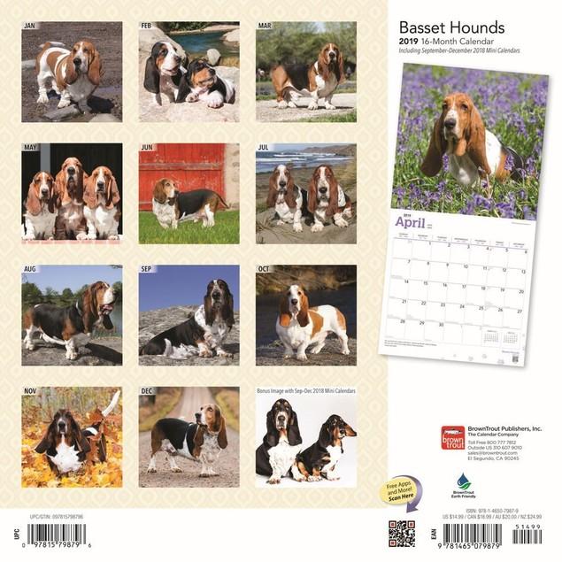 Basset Hounds Wall Calendar, Basset Hound by Calendars