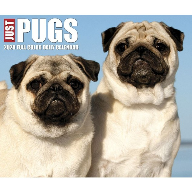 Pugs Desk Calendar, Pug by Calendars