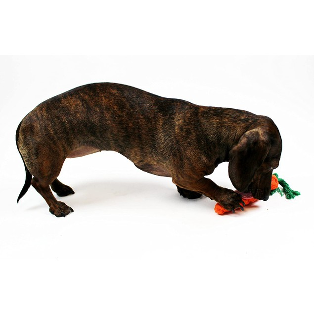 Midlee Rope Carrot Easter Dog Toys