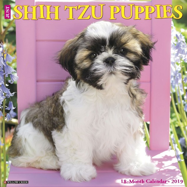 Just Shih Tzu Puppies Wall Calendar, Shih Tzu by Calendars