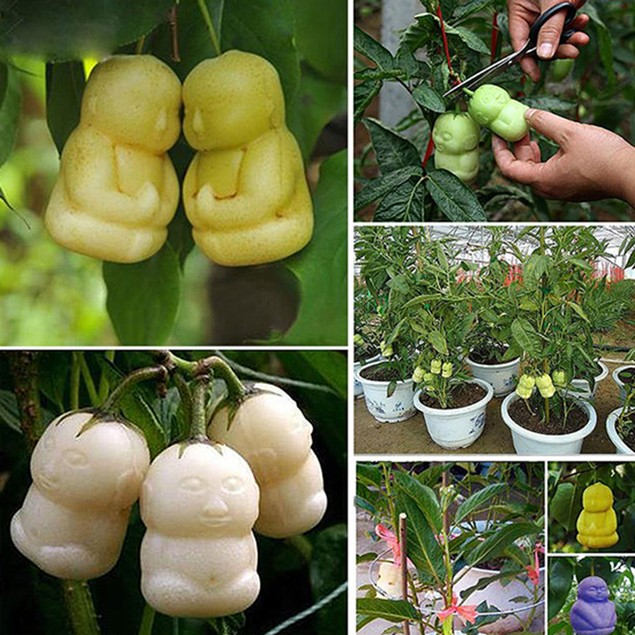 10Pcs/Pack Rare Delicious Baby Ginseng Fruit Seeds Family Plant Seeds