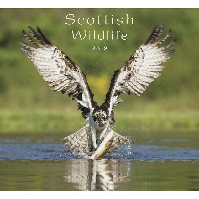 Scottish Wildlife Wall Calendar, Scotland by Calendars