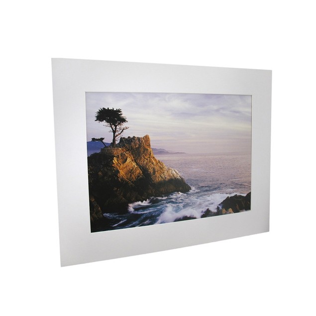 National Geographic Lone Cypress Tree Of Pebble Prints