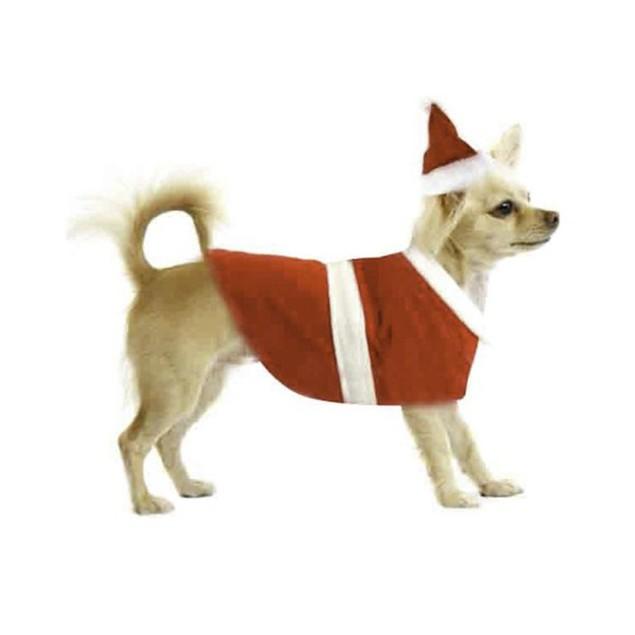 Santa Dog Outfit