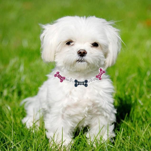 Crystal Dog Necklace