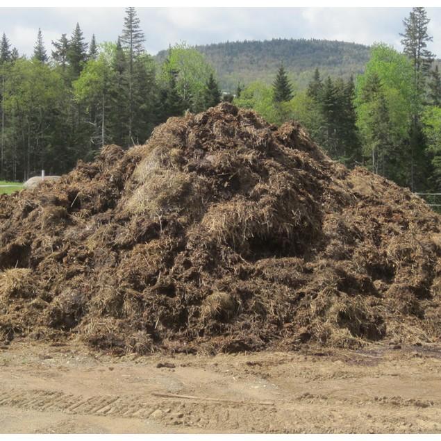 Stinky Pile of Manure