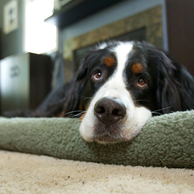 Furhaven Faux-Sheepskin Bolster Pet Bed